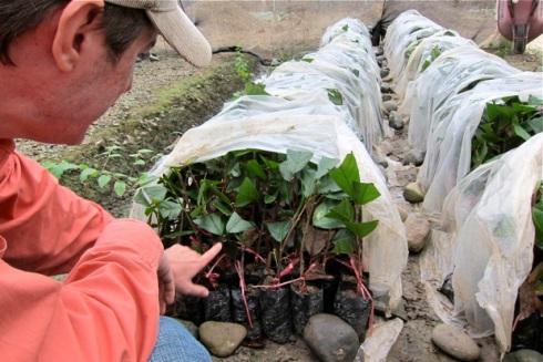 Schritt 3: Die Pflanzen dürfen sich erholen