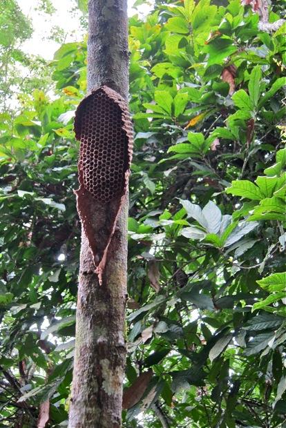 Bienen im Kakaowald ©Sarah Krobath