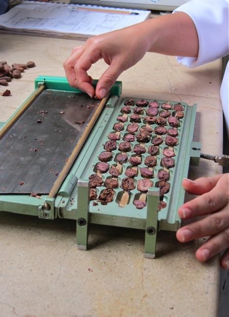 Guillotine für Kakaobohnen Schnittproben