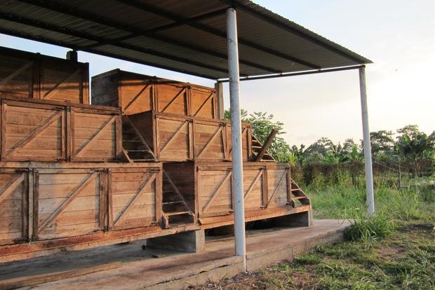 In den Holzkisten fermentieren die Kakaobohnen und bilden dabei für die Aromabildung wichtige Säure