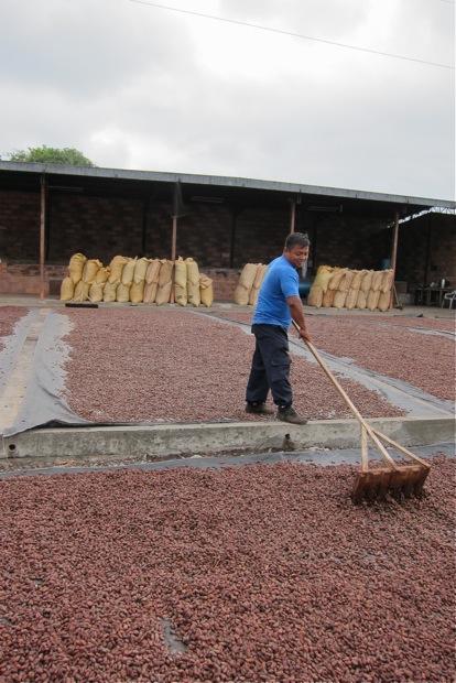 Virgiglio rollt die Kakaobohnen alle 30 Minuten mit einem Rechen